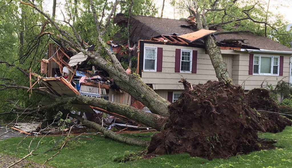 Large oak tree that has fallen onto a house