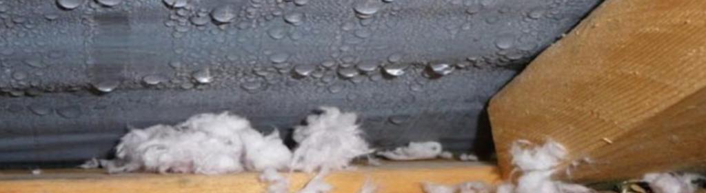 attic condensation dripping on insulation