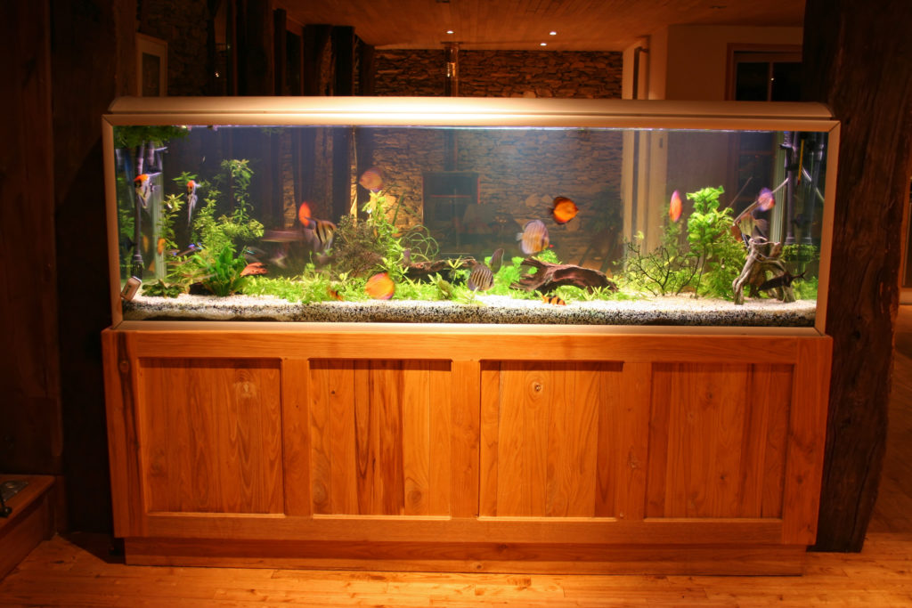 large fish tank in house