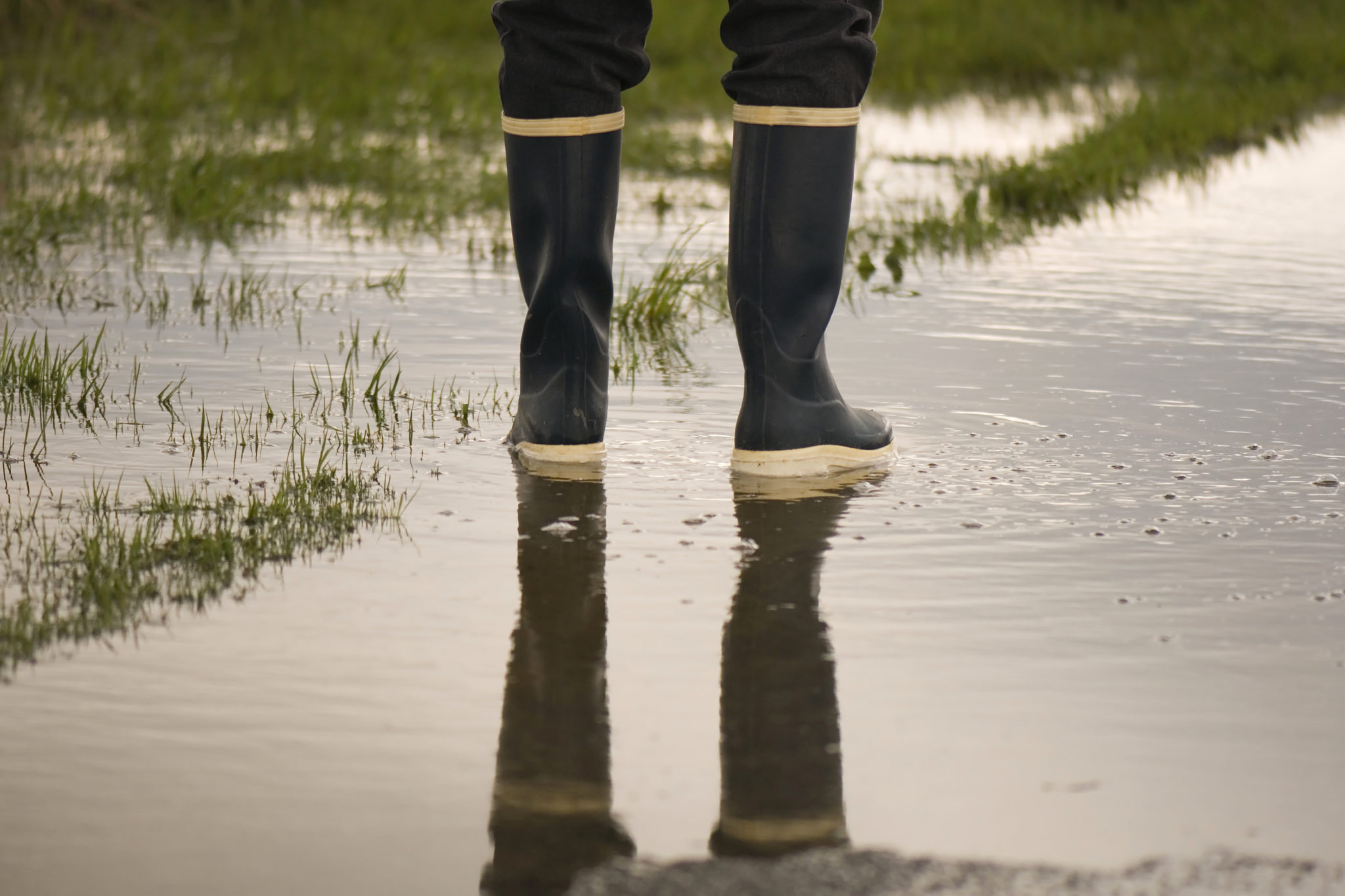 11 Ways To Get Rid Of Standing Water In Your Yard [2021]